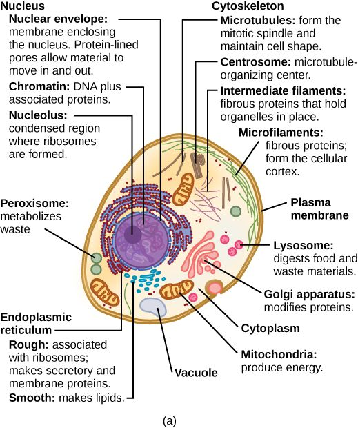 plant cell parts functions | Typical Plant Cell Parts And Functions