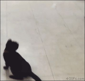 Kitten chasing a ping pong ball. [video]