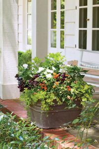 Rustic Freestanding Container. This sturdy galvanized-metal washtub—another flea market gem—holds a hearty mix of lantanas and impatiens. Arranged with maroon Joseph's coat, green coleus, and yellow creeping Jenny, this dense container was built for adorning a front or back porch.