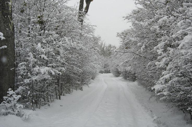 Karukinka!!! camino a lago escondido