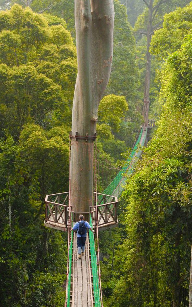 Rainforest Canopy Walkway Borneo Indonesia