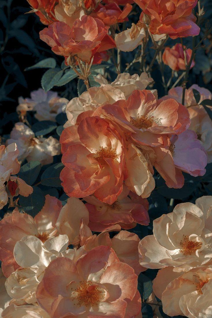Ori Moon On Twitter In 2020 Flower Aesthetic Flower Wallpaper Flowers Photography