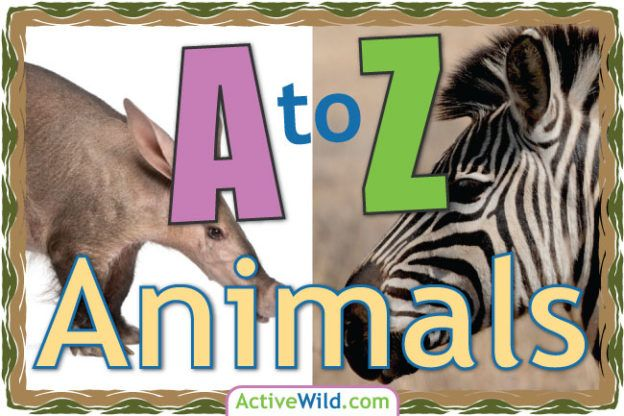 A To Z Animals List For Kids With Pictures Facts Animal A Z