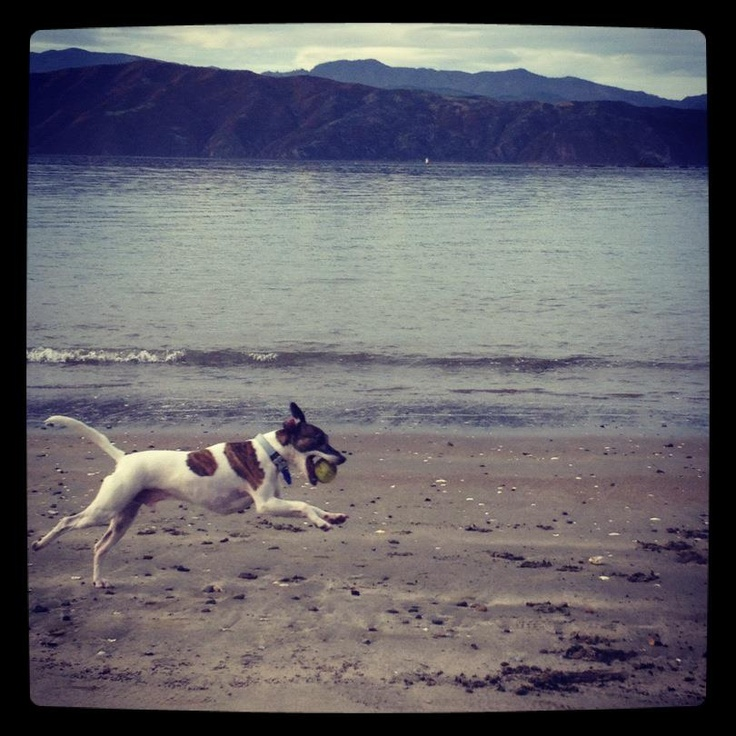 My whippet