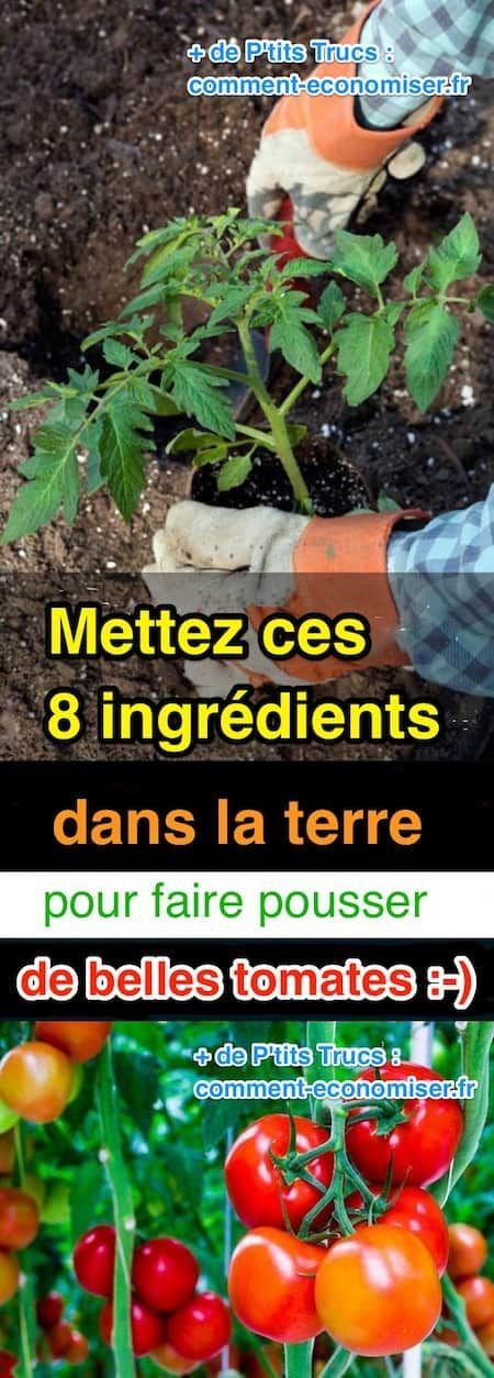 8 ingrédients pour faire pousser de belles tomates