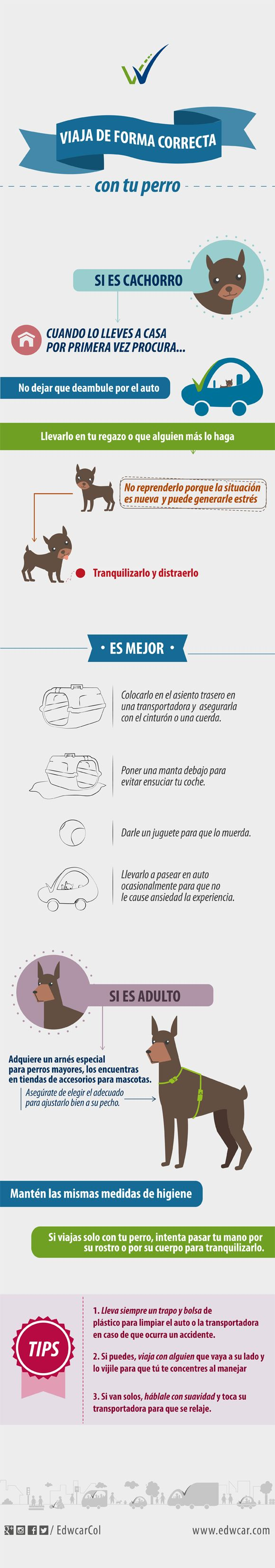 Tips para viajar con tu mascota en el auto.