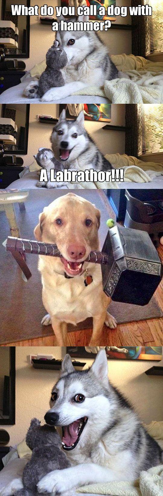 Epic dog training kdogtraining on pinterest
