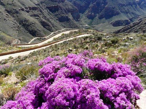 Swartberg Pass, between Oudtshoorn & Prince Albert hamlet, Karoo, South Africa