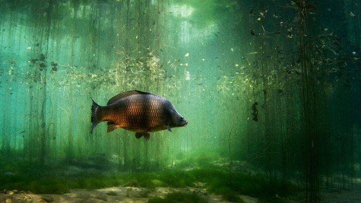 Unsere Verwandten Im Wasser Netz Natur Unterwasser Tiere Leben Im Wasser Unterwasser
