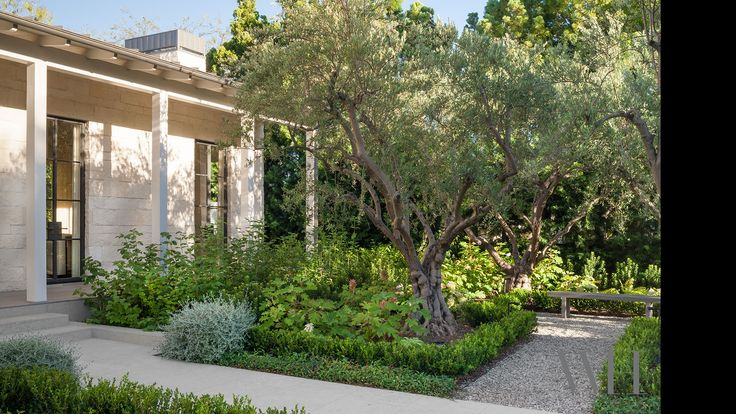 90 best Under the Olive Tree.. images on Pinterest   Olive tree ...
