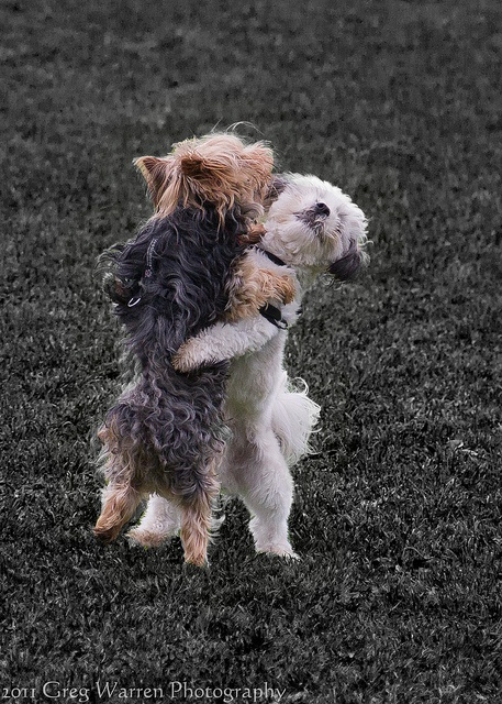 I think we can win the dance contest, don't you?