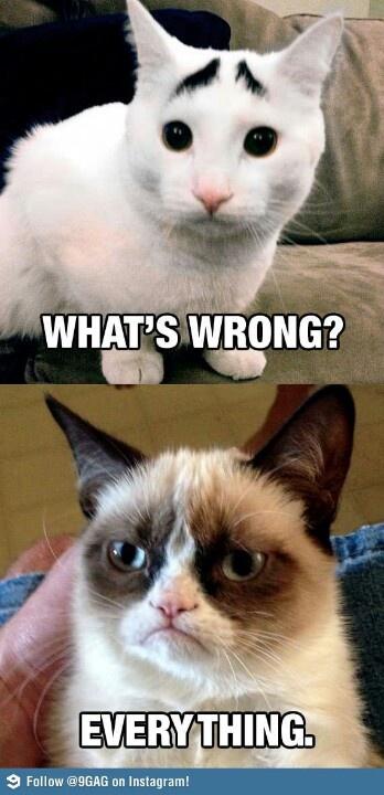 Même cat <3