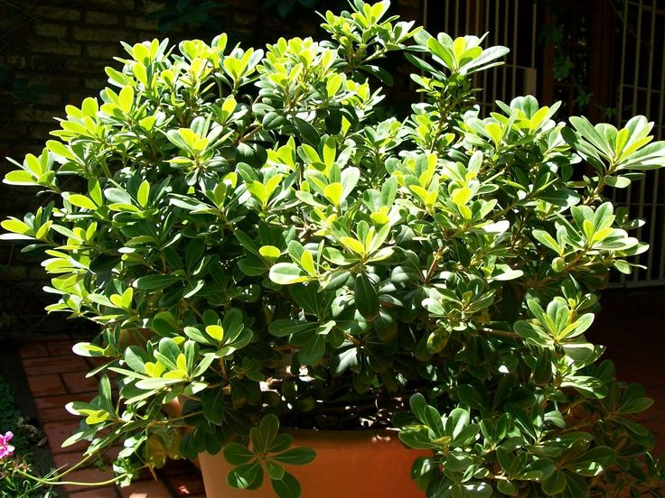 17 mejores ideas sobre perennes de sombra en pinterest - Plantas que aguantan temperaturas extremas ...