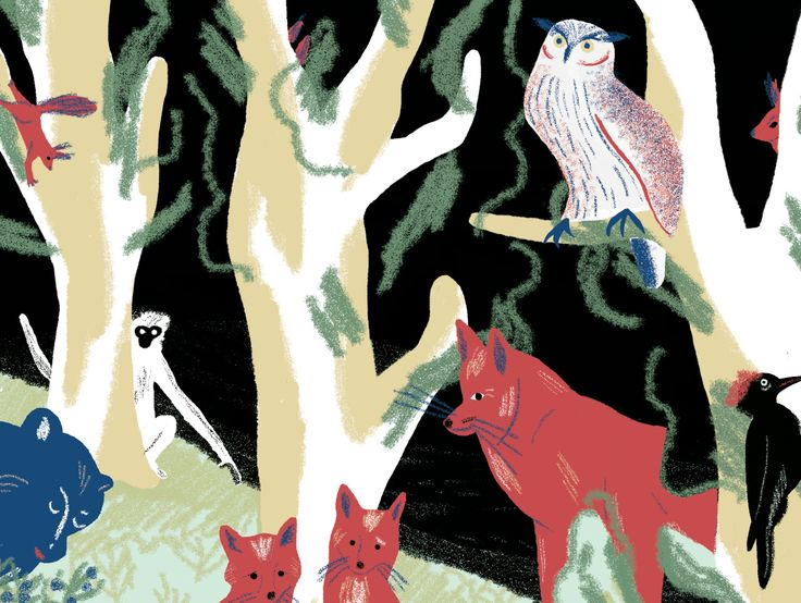 Nikola Logosová #ilustrace #illustration #czech #forest #animals #fox #owl #monkey #liška #sova #les #zvířátka #datel #veverka #squirrel #woodpecker