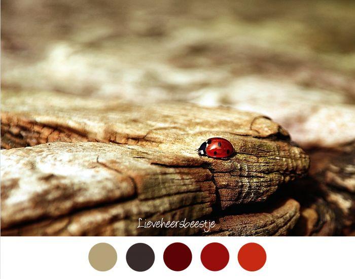 LIEVEHEERSBEESTJE - Lieveheersbeestje op oud stuk hout - Kleurenpalet rood en bruin