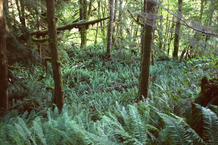 Cowichan River - Ferns Explore Vancouver Island, British Columbia Island General Shoppe Blog