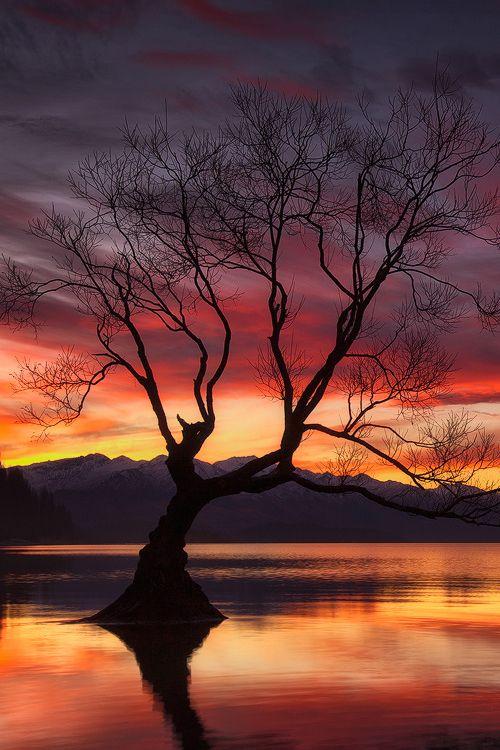 "heaven-ly-mind: "" Flame Tree. """