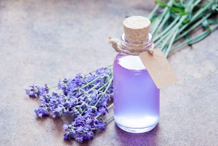 Top 10 Herbs To Grow In Your Garden