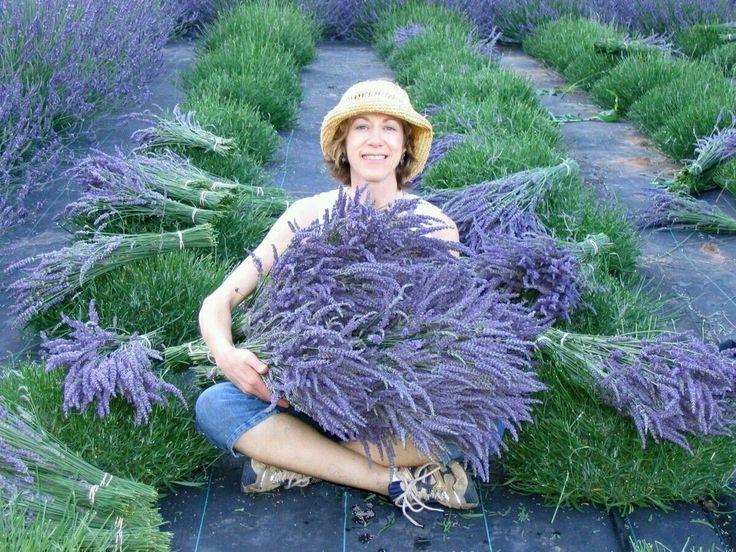 Adel miller stripping near lavender flowers — photo 6
