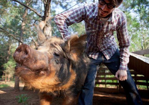 How One Young Farmer Started Raising Pigs - Georgia Organics