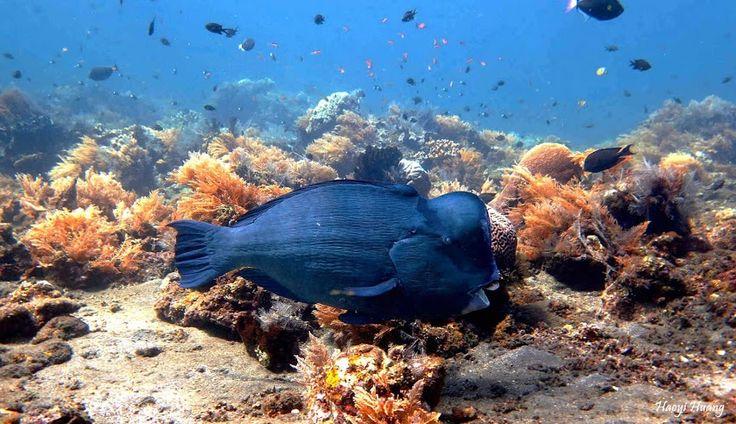 ... Indonesia Sea World Pinterest Bali, Bali indonesia and Indonesia