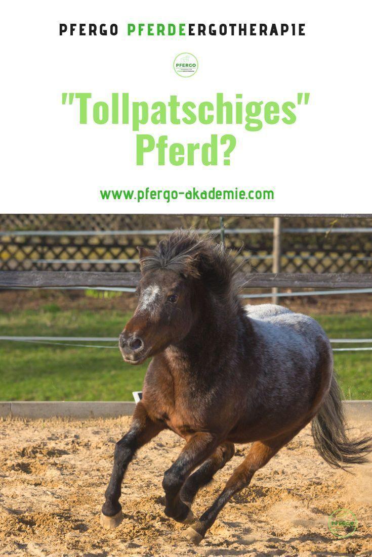 Pfergo Online Videokurs In 2020 Mit Bildern Pferde Training Pferde Reiten Lernen