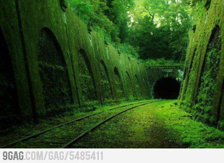 Beautifully Grown in Abandoned Train Track