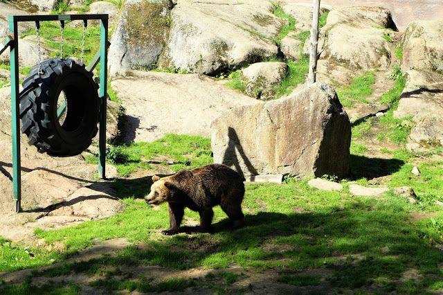 Ähtärin Eläinpuisto.