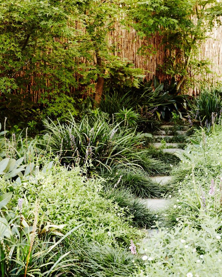 Abundant shade tolerant planting is used to frame the stepping stone walkway connecting different spaces within the garden. Mixed plantings of Liriope (Liriope muscari) and mondo grass (Ophiopogon japonicus) grow amongst the stones whilst Japanese maples (Acer palmatum spp.) provide privacy along the boundary fence.