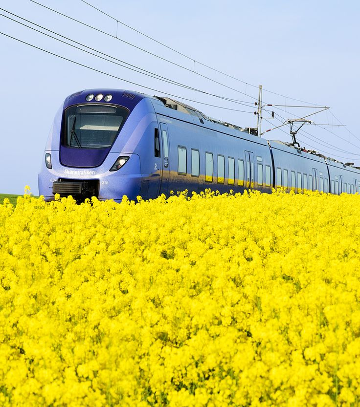 Train (Skånetrafiken, pågatåg) and rapeseed field in Österlen, Southern Sweden.