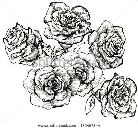 13 best Flower Sketches images on Pinterest