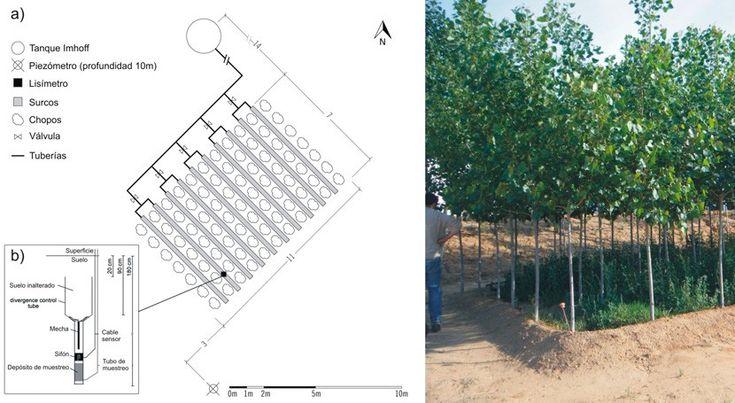 Filtro verde de la Planta Experimental de Carrión de los Céspedes (Sevilla) empleado para depurar las aguas residuales de un edificio de oficinas. a)esquema del FVI, b) esquema del lisímetro; c) foto del FV.