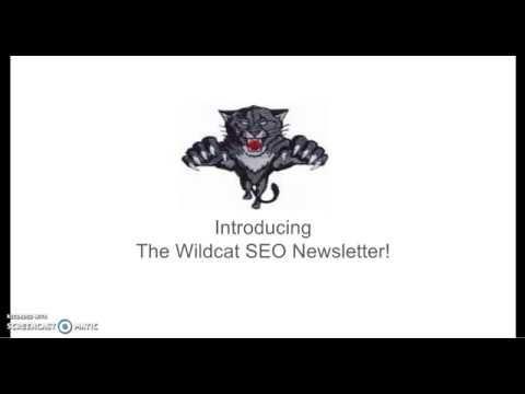 #SEO #News #The #Wildcat #SEO #Master