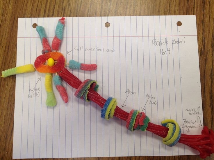 Candy Neuron Model - Bing Images