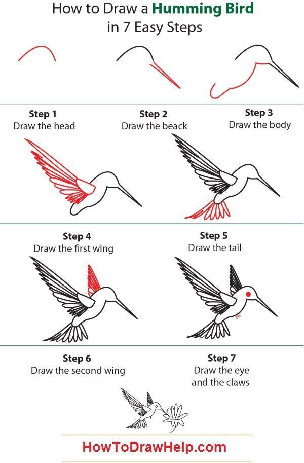 How to Draw a Hummingbird | how to draw a humming bird