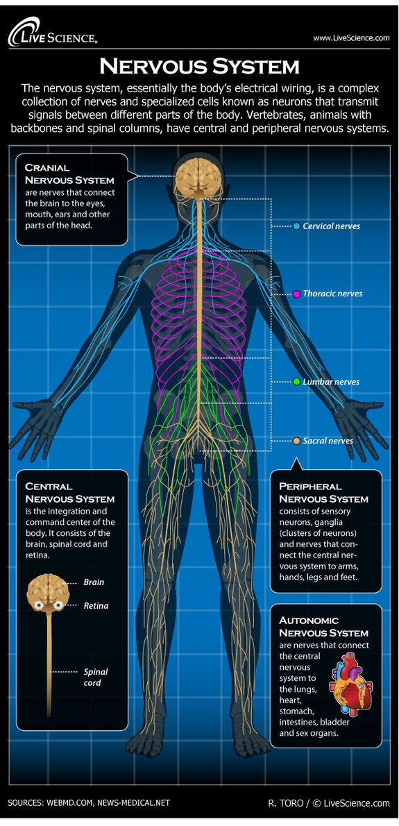 The nervous system is essentially the body's electrical wiring. The nervous system can also experience functional difficulties, conditions such as epilepsy, Parkinson's disease, multiple sclerosis, ALS, Huntington's chorea, and Alzheimer's disease. Structural disorders such as brain or spinal cord injury, Bell's palsy, cervical spondylosis, carpal tunnel syndrome, brain or spinal cord tumors, peripheral neuropathy, and Guillain-Barré syndrome also strike the nervous system.