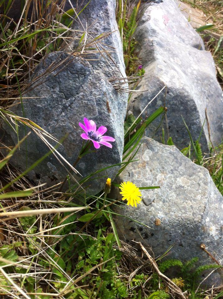 Flowers between rocks!