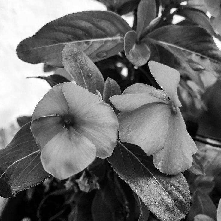 """14 kedvelés, 1 hozzászólás – Hanging Lens (@hanginglens) Instagram-hozzászólása: """"Wet flower ⚫️⚪️ #mono"""""""