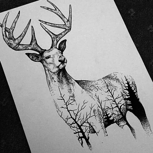 amazing, art, black and white, cool, deer, drawing, paper
