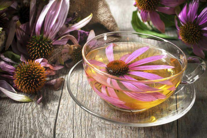Antes y durante una gripa, el té de equinácea funciona muy bien para ayudar a controlar los insoportables síntomas. Activa el sistema inmune y alivia el dolor.