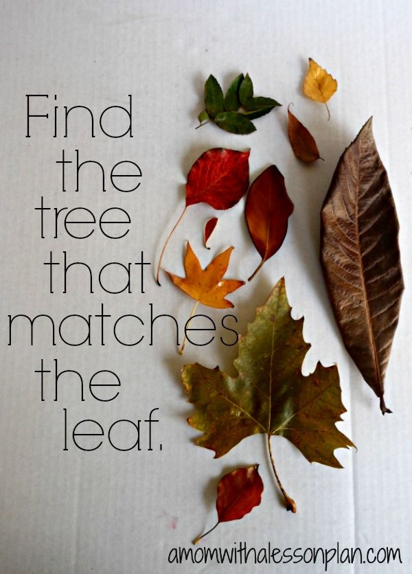Find the tree that matches the leaf!