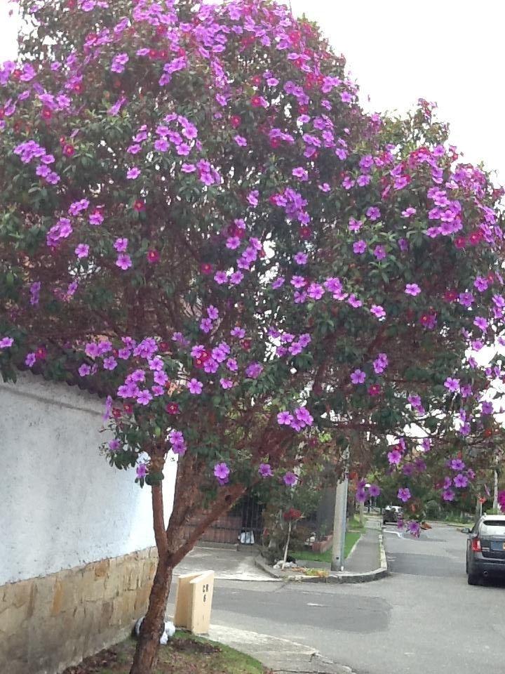 arbusto cuero