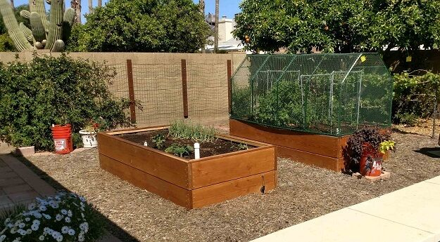 Learn how to grow organic vegetables and more in desert climates from someone who is doing it successfully!