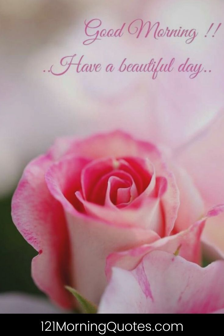 500 Amazing Good Morning Images Wallpaper And Pictures With Quotes Good Morning Greetings Morning Greeting Good Morning Flowers Good morning pink flowers hd wallpaper
