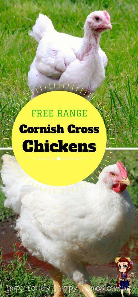 Free Range Cornish Cross Chickens - you can raise them on ...