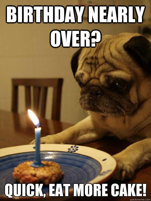 d3d3179471bf33d9043a5860c36f6004 happy birthday pug birthday wishes 109 best birthday images on pinterest birthdays, happy b day and