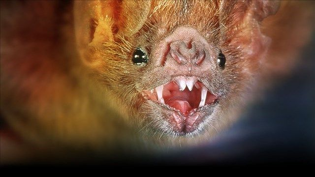 LFCHD: Bat Tests Positive For Rabies In Lexington - LEX18.com | Continuous News and StormTracker Weather