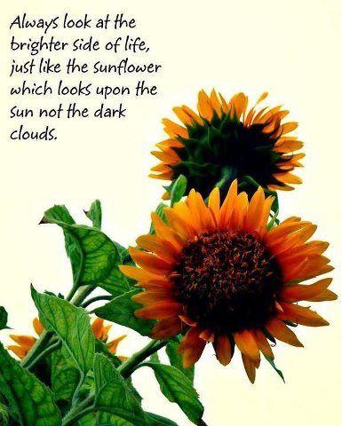 Power of Sunflower