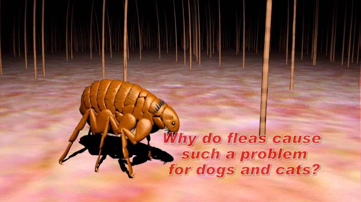 Learn about the flea and tick life cycle in order to understand how easy infestation can occur