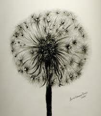 #selenexul #airflower